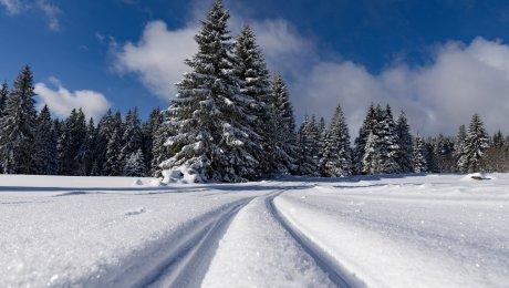 LaRebenne - Forêt Noire Schwarzwald